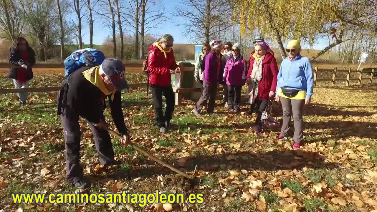 Asociación amigos del Camino de Santiago de León Plantacion Via Trajana